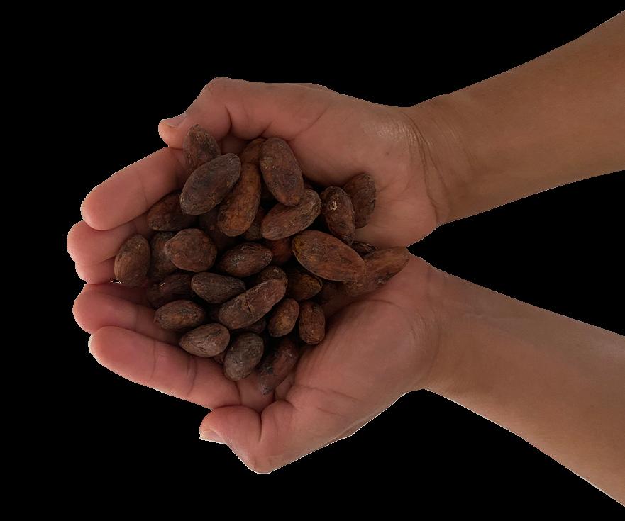 manos sosteniendo cacao
